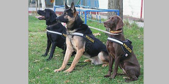 Los perros policías huelen la pasta y encontraron los millones de la mafia china