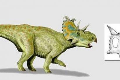 Hallado en Canadá un dinosaurio con cuernos y herbívoro