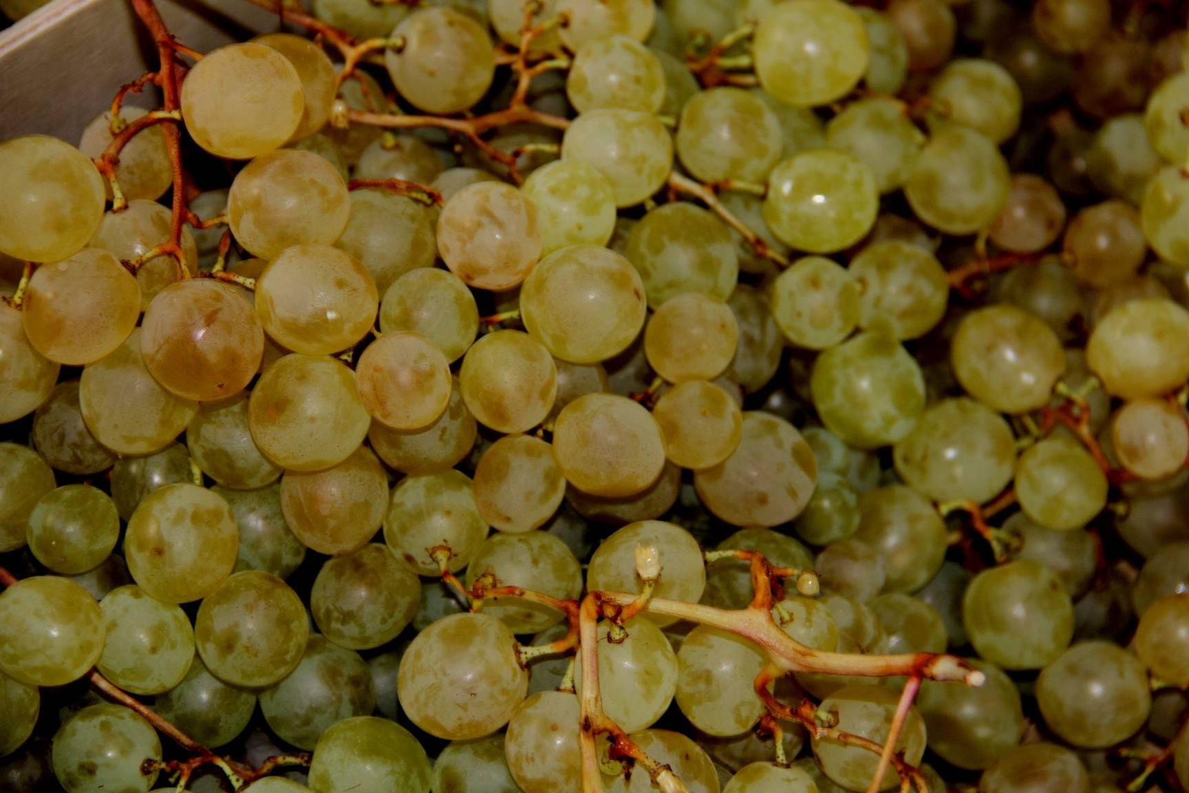 Bodegas y Viñedos VERUM celebra el Día Europeo del Enoturismo maridando sus vinos con platos típicos y chocolates