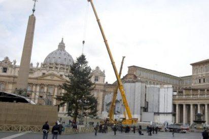 El árbol de Navidad en la Plaza de San Pedro