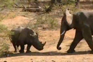 Los secretos de la fauna gigante de África