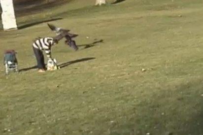 Un águila real intenta 'cazar' a un niño pequeño en un parque