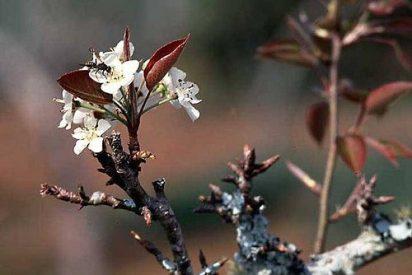 """La primavera de los """"nuevos tiempos"""""""