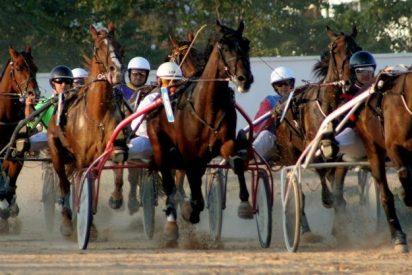 Las organizaciones pro derechos de los animales denuncian al hombre que mató a palos a su caballo
