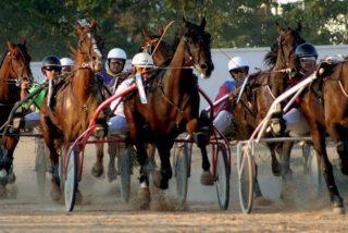 """Muere un caballo en el Hipódromo de Manacor tras ser golpeado """"por su mal comportamiento"""""""