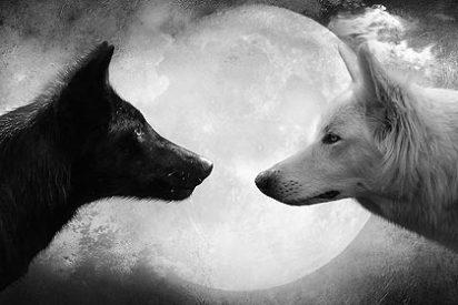 Los perros vienen del lobo que comía hidratos de carbono de la basura