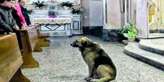 Un perro vagabundo que fue adoptado va a misa todos los días desde que murió su dueña