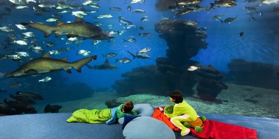 Palma Aquarium celebra una fiesta benéfica para ayudar a niños con parálisis cerebral
