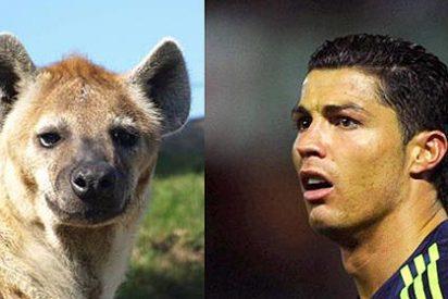 El Real Madrid pedirá una indemnización de seis millones a TV3 por el vídeo de las hienas