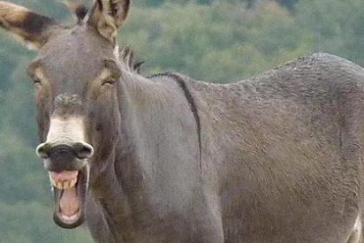 Un burro le arranca la cara de un mordisco a una mujer que paseaba cerca de Festival Park