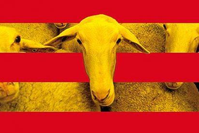 """Catalunya Acció insta a """"boicotear"""" los productos y servicios españoles"""