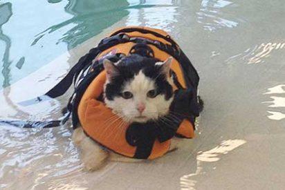 Una presentadora de TV se convierte en estrella de Internet al no poder evitar partirse de risa hablando de un gato obeso nadador