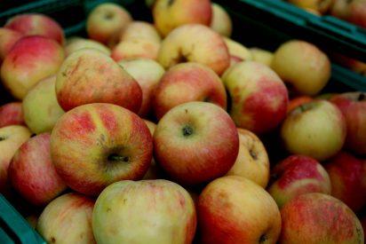 ¡Presume de Gadget con manzanas Marlene®! ¡Además de calidad, traen muchos premios!