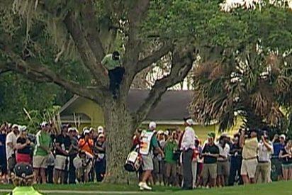Sergio García trepa a un árbol y ejecuta desde la copa un golpe 'imposible'