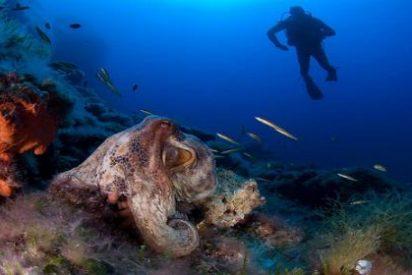 La Comisión Europea pide a España frenar en seco la pesca ilegal en Cabrera y Mallorca