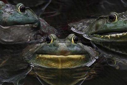 El jubilado que se ha hecho millonario gracias a su miedo insuperable a las ranas
