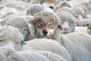 No sólo hay que oler a oveja, también hay que salir del establo