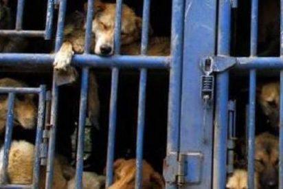 Le dan 72 horas de plazo al dueño de unos perros para que deje de tenerlos en unas condiciones lamentables