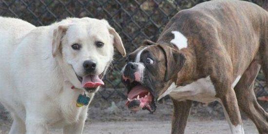 ¿Son felices nuestras mascotas?