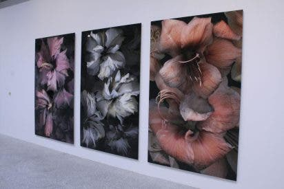 Brotes del arte español actual en el Jardín Botánico
