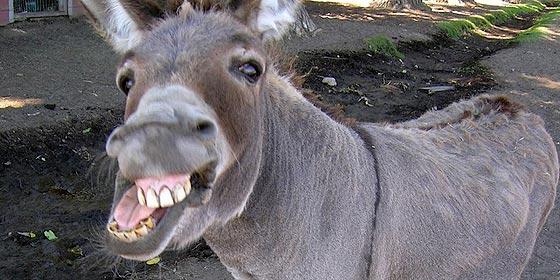 """El juez llama """"burros"""" a los políticos en una sentencia laboral"""