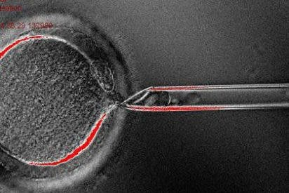 Reprograman células de piel humana para que sean células madre