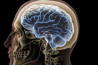 Tu cerebro decide cuánto tiempo vives y cuándo debes morir