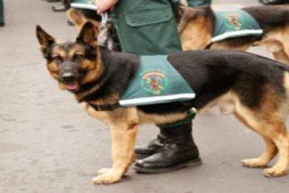 Medalla para el perro que localizó una de las bombas mortales de ETA en Palma Nova