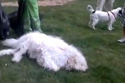 Un policía mata a un perro en un parque y arden las redes sociales