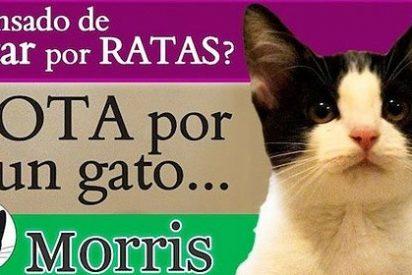 El gato que se ha presentado candidato en México y gana a los políticos
