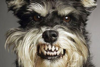 El ayuntamiento devuelve cacas de perro empaquetadas a ciudadanos 'olvidadizos'