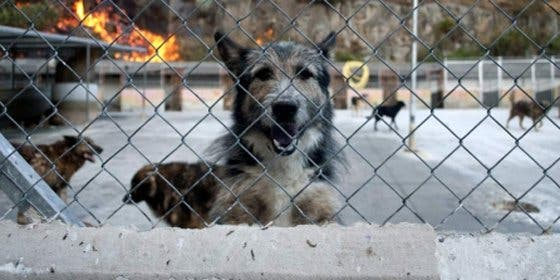 Detenidos en Inca por robar ocho perros de perreras municipales y protectoras