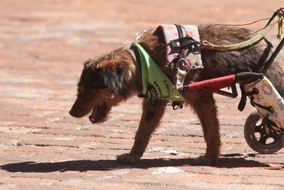 Un anciano deja tuerto a un perro a golpes y tiene que estar un año bajo custodia familiar