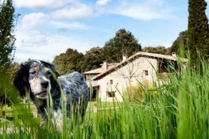 Admisión de mascotas y cercanía a la playa, clave para el turismo rural en agosto