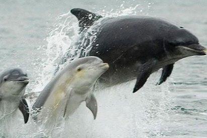 Los delfines se llaman unos a otros por su 'nombre'