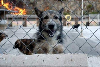 Muere congelado y su perro cuida su cadáver 23 días para que no se lo coman