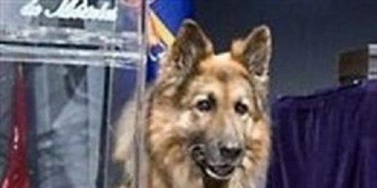 Muere Ajax, el perro jubilado que evitó la masacre de ETA en Palmanova