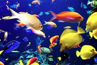 El calentamiento de los océanos empuja a las especies marinas hacia los polos