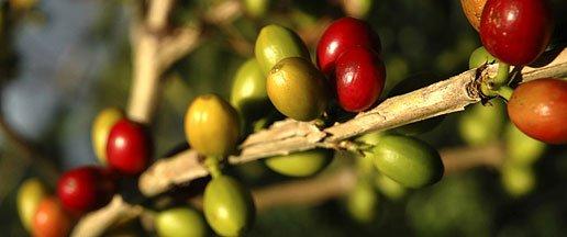 """Nespresso y Fairtrade colaboran en el lanzamiento del """"Farmer Future Programme"""""""