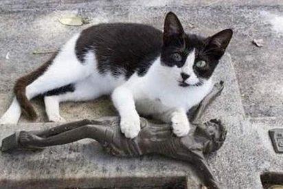 Un gato deja todos los días un regalo en la tumba de su dueño a modo de recordatorio