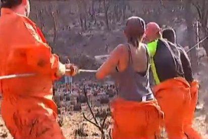 Mientras los políticos piensan cómo restaurar nuestra Serra...¡los voluntarios dan el callo!