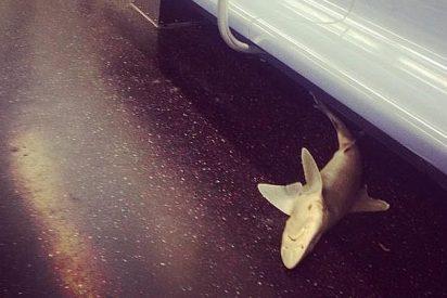 Aparece un tiburón en un vagón del metro de Nueva York