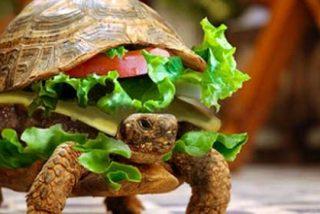Un chino trata de viajar en avión con su tortuga oculta en una hamburguesa