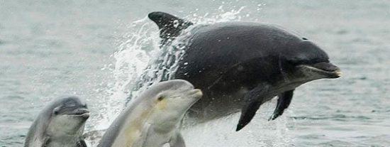 La muerte de más de un centenar de delfines en la costa atlántica alarma a los científicos