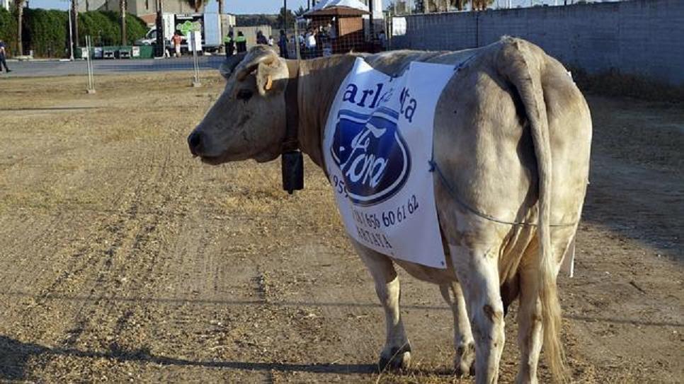 La 'negocianta' vaca 'Campanera' se las sabe todas y cambia sus excrementos por euros