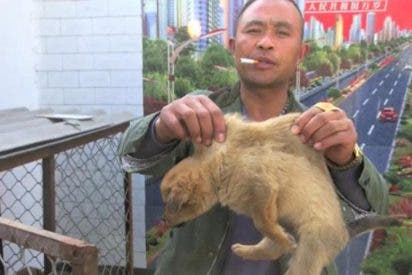 Aterrador: así roban y sacrifican a perros y gatos en China para merendárselos
