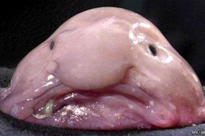 ¿Considera que este es el animal más feo del mundo? A muchos sí se lo parece