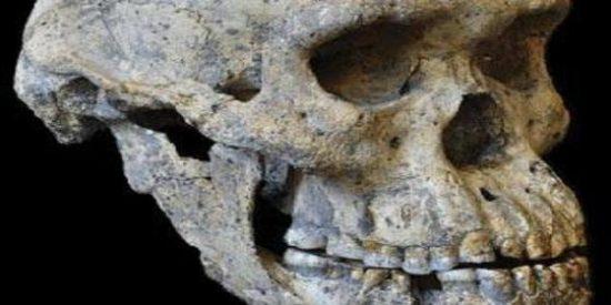 Un misterioso cráneo pone ahora patas arriba la historia de la evolución humana