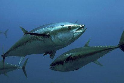 Más de la mitad de las mujeres españolas tiene el mercurio por las nubes de tanto comer pescado