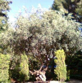 Los árboles del Paraíso y el bautismo cristiano